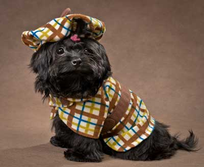 Cute black dog dressed up in his best dog outfit